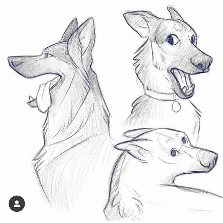 german shepard sketch