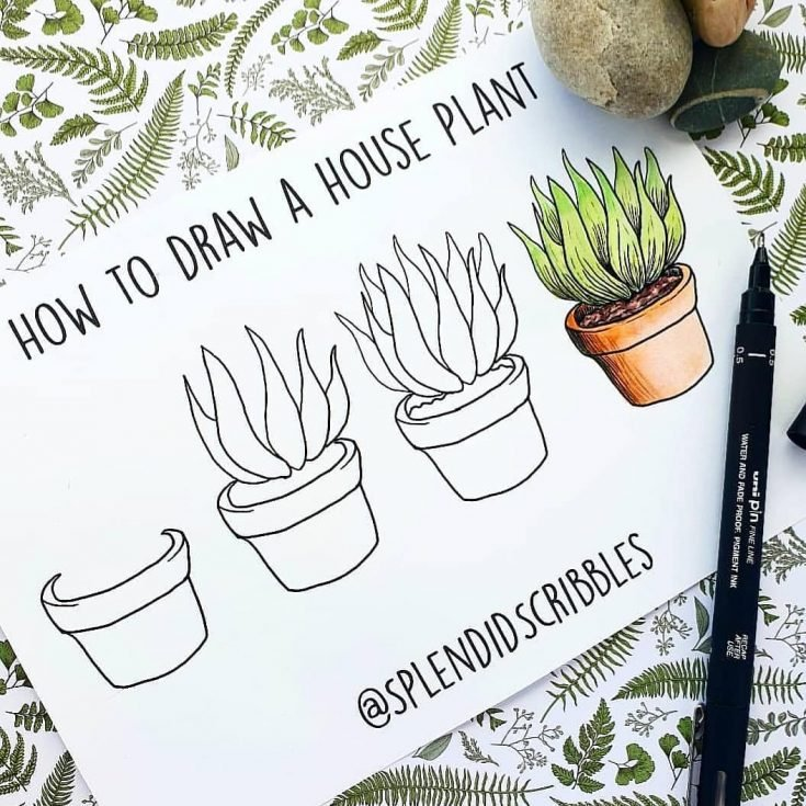 how to draw house plant