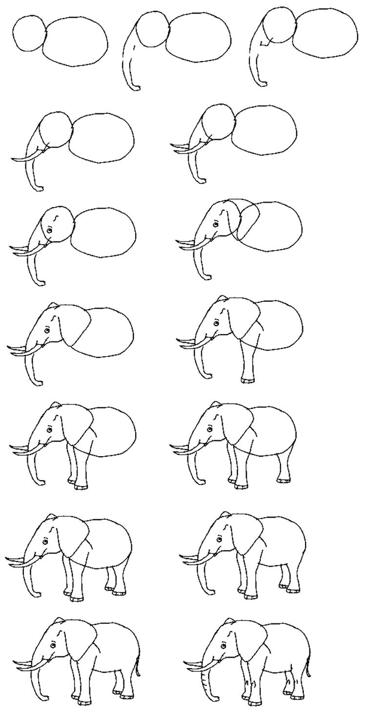 how to draw and elephant