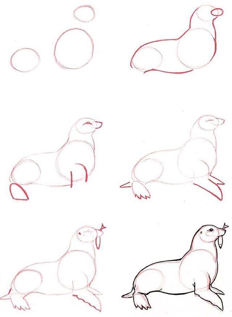 seal sketch