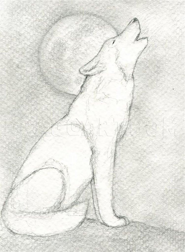 wolf howling at moon drawing