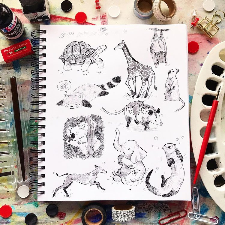 raccoon, elephant and more